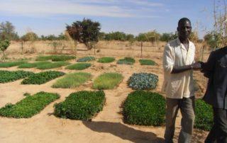 Gemüsezucht in Basalogho